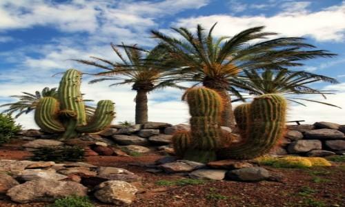 Zdjęcie HISZPANIA / Fuerteventura/Wyspy Kanaryjskie / Oasis Park / Grządka