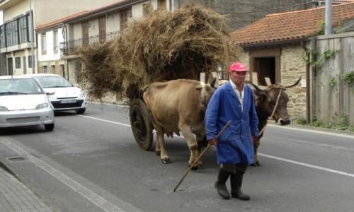 Zdjęcie HISZPANIA / Galicia / Arzua / zaprzęg