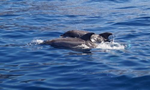 Zdjecie HISZPANIA / Teneryfa - Wyspy Kanaryjskie / Los Gigantes / Delfiny