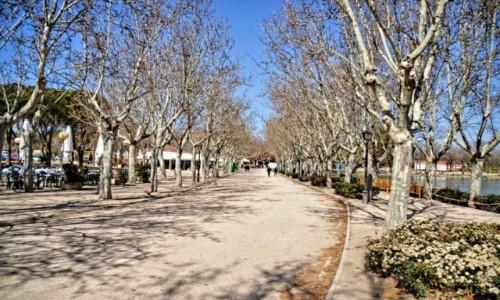 Zdjecie HISZPANIA / Madryt / Madryt / Zima w Madrycie