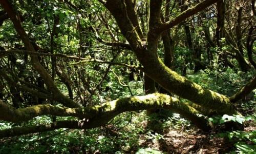 Zdjecie HISZPANIA / Wyspy Kanaryjskie / La Gomera / Park Narodowy Garajonay 1