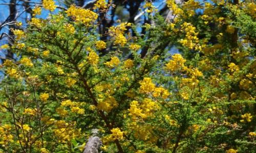 Zdjecie HISZPANIA / Wyspy Kanaryjskie / La Gomera / Park Narodowy G