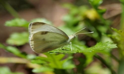 Zdjęcie HISZPANIA / Wyspy Kanaryjskie / La Gomera / Park Narodowy Garajonay 10