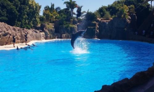 Zdjęcie HISZPANIA / -Wyspy Kanaryjskie / Teneryfa / Loro Park - delfiny