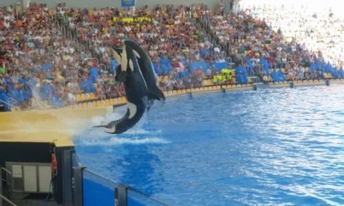 Zdjęcie HISZPANIA / -Wyspy Kanaryjskie / Teneryfa / Loro Park - orki