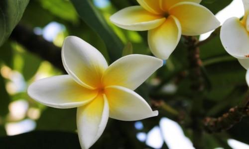 Zdjecie HISZPANIA / Wyspy Kan. / La Palma / Kwiat