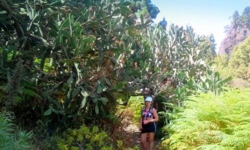 HISZPANIA / Wyspy Kanaryjskie / La Palma / Pod drzewiastą opuncją