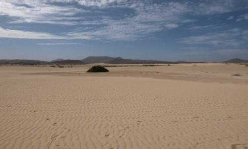 Zdjecie HISZPANIA / Fuertaventura  / Corralejo /  Dunas de Corralejo
