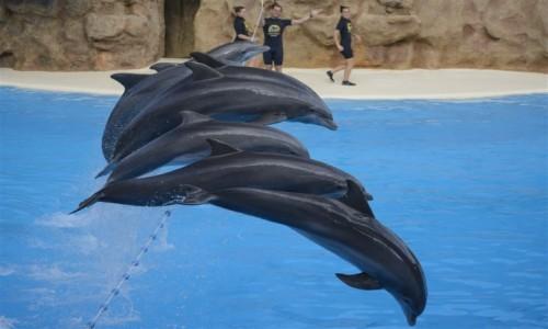 Zdjecie HISZPANIA / Teneryfa / Loro Parque / pokaz delfinów