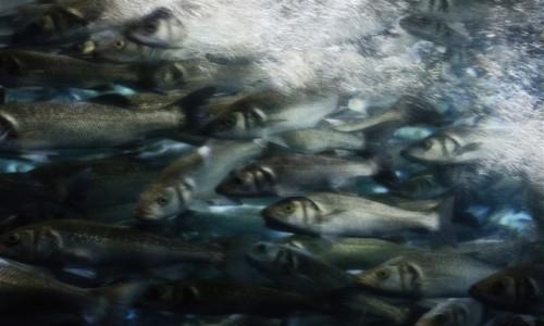 Zdjecie HISZPANIA / Teneryfa / Loro Parque (Puerto de la Cruz) / sen rybaka