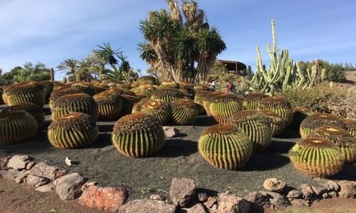 HISZPANIA / La Lajita / Fuerteventura / Ogród Kaktusów 2