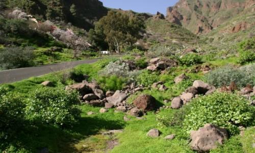 HISZPANIA / Gran Canaria / Wąwóz Guayadeque / Wszystkie odcienie zieleni