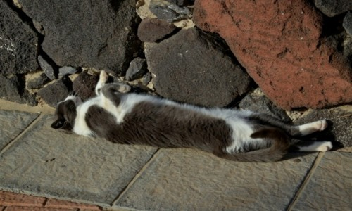 HISZPANIA / Morro Jable / Fuerteventura / Odpoczynek kotka