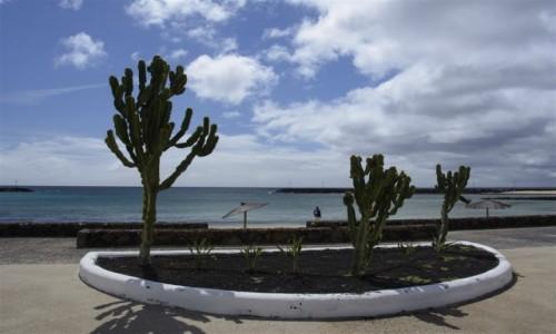 Zdjecie HISZPANIA / Lanzarote / Costa Teguise / egzotyczny klombik