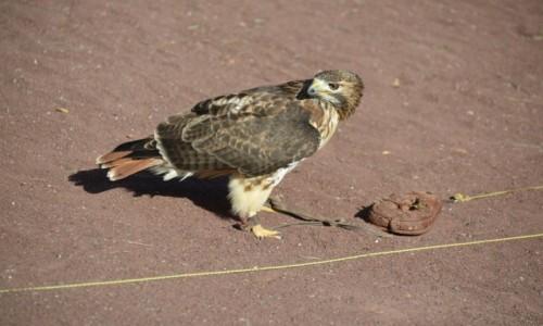 Zdjęcie HISZPANIA / La Lajita Oasis Park / Fuerteventura / Myślący łowca
