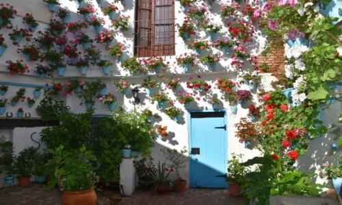 Zdjęcie HISZPANIA / Andaluzja / Kordoba / Patio