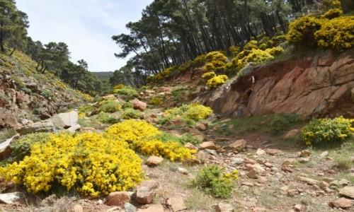 Zdjęcie HISZPANIA / Andaluzja / Po drodze z  Malagi do Rondy / Widziane po drodze