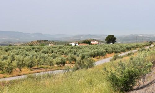Zdjęcie HISZPANIA / Andaluzja / między Kordobą a Grenadą / Krajobraz widziany po drodze