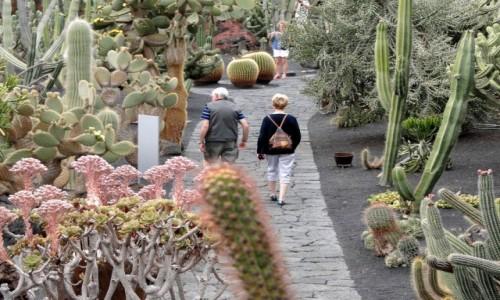 HISZPANIA / Wyspy Kanaryjskie / Lanzarote / Spacerek wśród kaktusów.