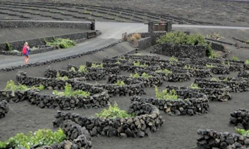 Zdjęcie HISZPANIA / Wyspy Kanaryjskie / Lanzarote / Lanzaroteńskie winnice.