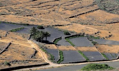 Zdjęcie HISZPANIA / Wyspy Kanaryjskie / Lanzarote / Lanzaroteńskie pola uprawne.