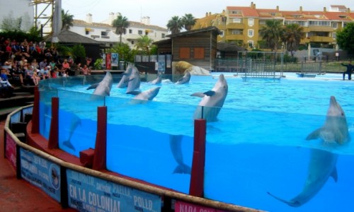 HISZPANIA / Andaluzja / Fuengirola / Tańczące delfiny