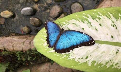 Zdjęcie HISZPANIA / Costa Del Sol / Motylarnia / Cudowny motyl