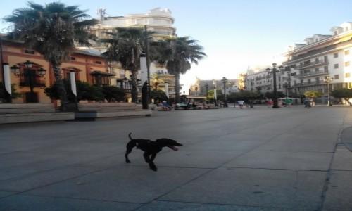 Zdjecie HISZPANIA / stolica i główne miasto Andaluzji / Sewilla / Po Hiszpańsku