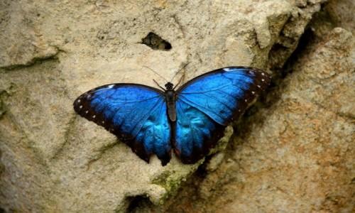 Zdjecie HISZPANIA / Andaluzja / Benalmadena / Jestem taki niebieski