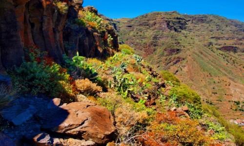 Zdjecie HISZPANIA / Wyspy Kanaryjskie / La Gomera / roślinność górska