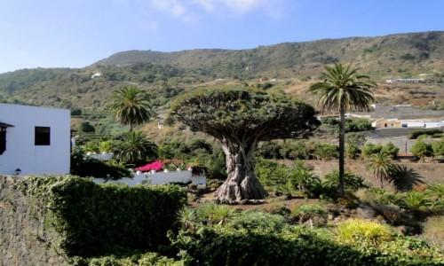 HISZPANIA / Wyspy Kanaryjskie / Teneryfa / Kanaryjskie wspomnienie - Teneryfa (2)