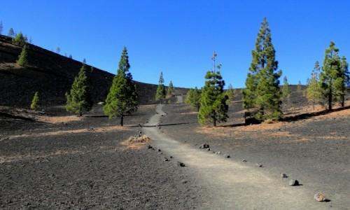 Zdjecie HISZPANIA / Wyspy Kanaryjskie / Teneryfa - Park Narodowy Teide / Kanaryjskie wspomnienie - Teneryfa (7)
