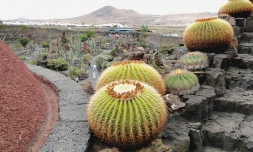 Zdjecie HISZPANIA / Wyspy Kanaryjskie / Lanzarote / Kanaryjskie wspomnienie - Lanzarote