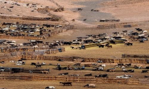 Zdjecie HISZPANIA / Fuerteventura / Las Parcelas / pastwisko