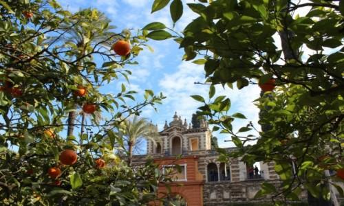Zdjecie HISZPANIA / Andaluzja / Sewilla / Widok na Real Alcazar