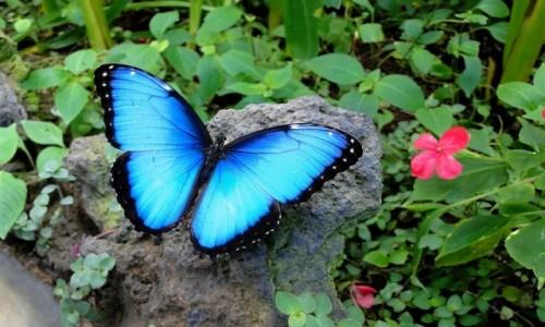 Zdjęcie HISZPANIA / Wyspy Kanaryjskie / Teneryfa / Motyl specjalnie dla Nitkaski.