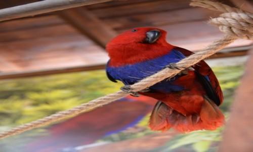 Zdjecie HISZPANIA / Costa Del Sol / Benalmadena / Czerwona papużka