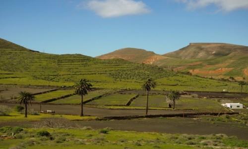 Zdjecie HISZPANIA / Wyspy Kanaryjskie / Lanzarote / Dolina 1000 palm