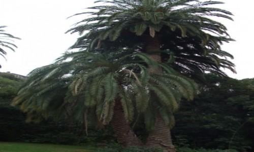 Zdjęcie HISZPANIA / Wyspy Kanaryjskie / Gran Canaria / Cactualdea Park