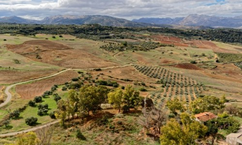 Zdjecie HISZPANIA / Andaluzja / Ronda / Andaluzyjska toskania
