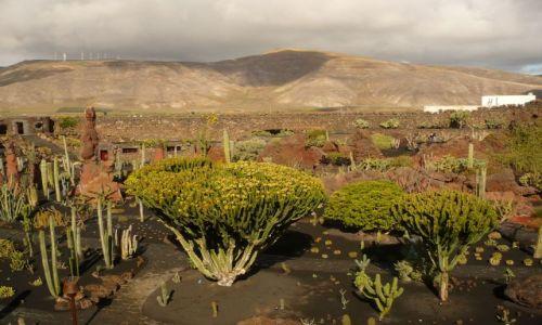 Zdjecie HISZPANIA / Lanzarote / Lanzarote / park kaktusow
