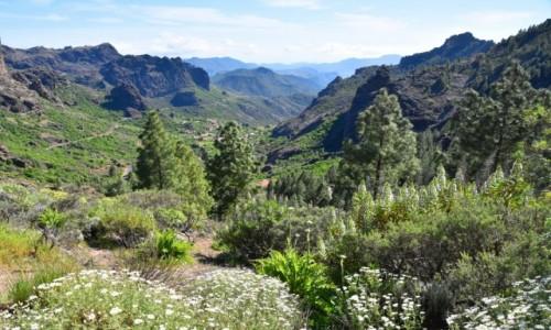 Zdjęcie HISZPANIA / Gran Canaria / Parque Rural del Nublo / W drodze na Roque Nublo