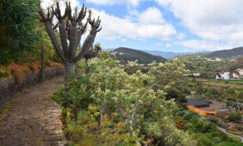 Zdjecie HISZPANIA / Gran Canaria / Las Palmas / Jardin Botanico Viera & Clavijo