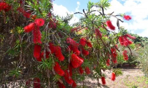 Zdjecie HISZPANIA / Gran Canaria / Las Palmas / Jardin Botanico Viera & Clavijo 3
