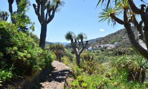 HISZPANIA / Gran Canaria / Las Palmas / Jardin Botanico Viera & Clavijo 4