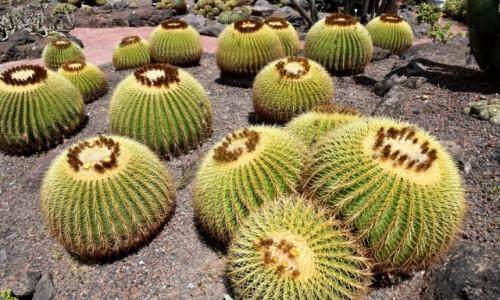 Zdjecie HISZPANIA / Gran Canaria / Las Palmas / Jardin Botanico Viera & Clavijo 5