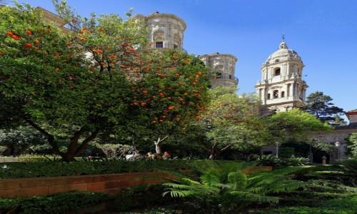 Zdjęcie HISZPANIA / Andaluzja / Malaga / Ogród obok katedry