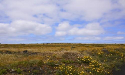 Zdjęcie HISZPANIA / Wyspy Kanaryjskie - Lanzarote / Ye / wiosna!