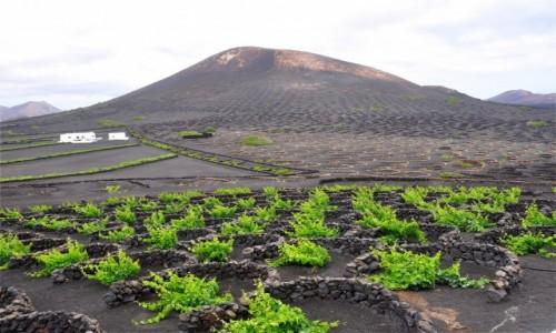 Zdjecie HISZPANIA / Wyspy Kanaryjskie / Lanzarote / Winnice u stóp wulkanów