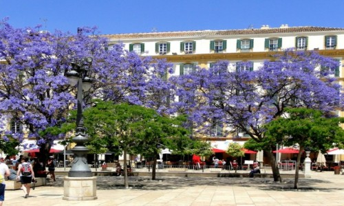 Zdjęcie HISZPANIA / Andaluzja / Malaga / Wiosna w Andaluzji.